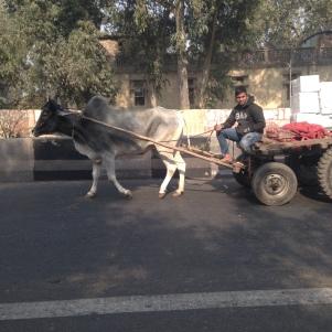 Morceau de vie à Delhi