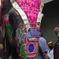Eléphant peint - Amritsar