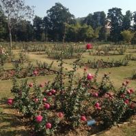 Rose Garden - Chandigargh