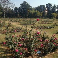 Rose Garden - Chandigargh