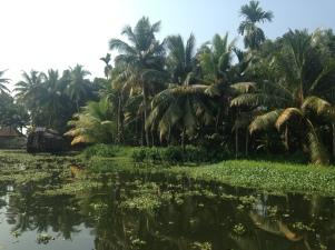 Palmeraie / Backwaters / Kerala