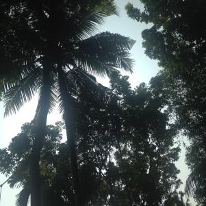 Morning Palmtree / Backwaters / Kerala