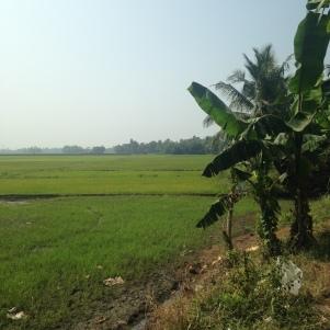 Rizière / Backwaters / Kerala