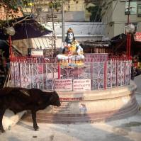 Petite place - Rishikesh