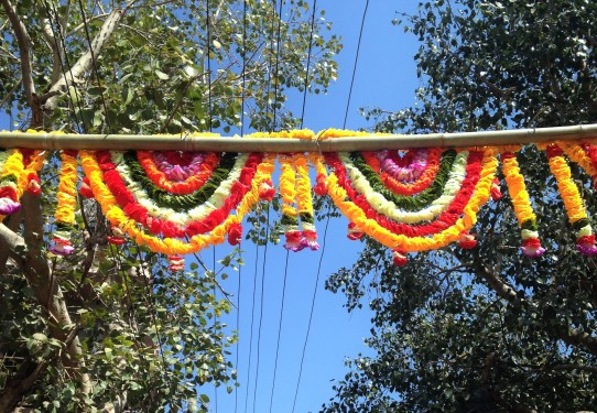 Guirlande de fleurs - Jodhpur