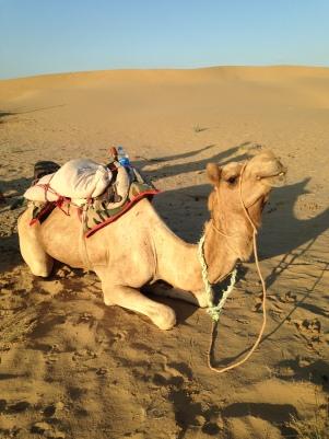 Mandra, mon chameau de course pour l'après-midi