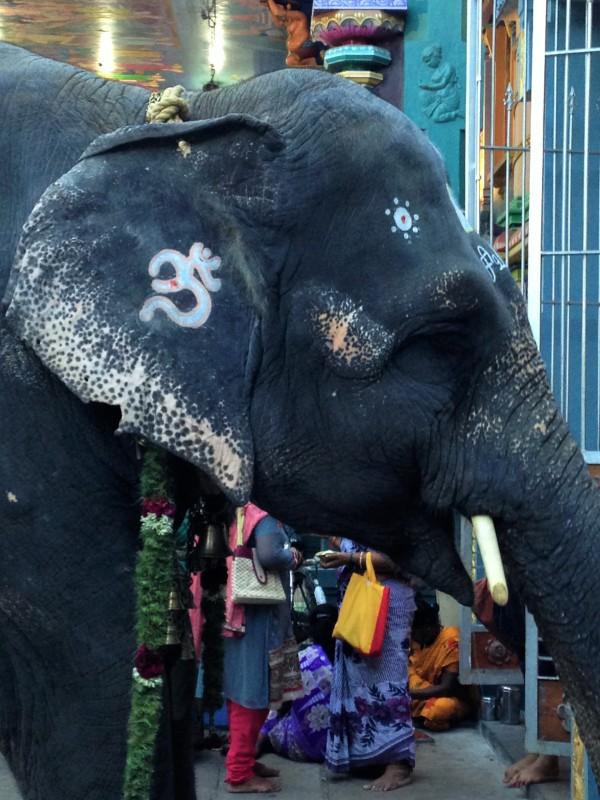 Elephant Om - Pondi