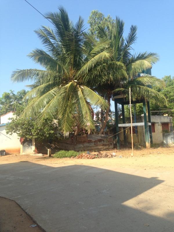 Palmtree - Serenity Beach - Pondi